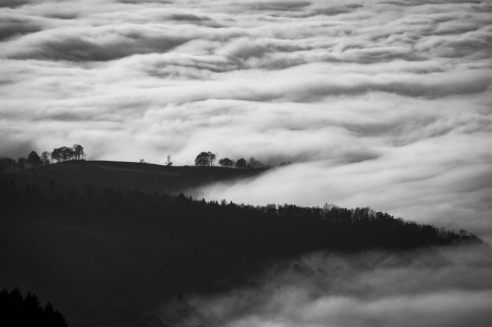 Wald_Wolke