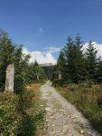 Wanderweg zum Berg Lusen im Bayrischen Wald