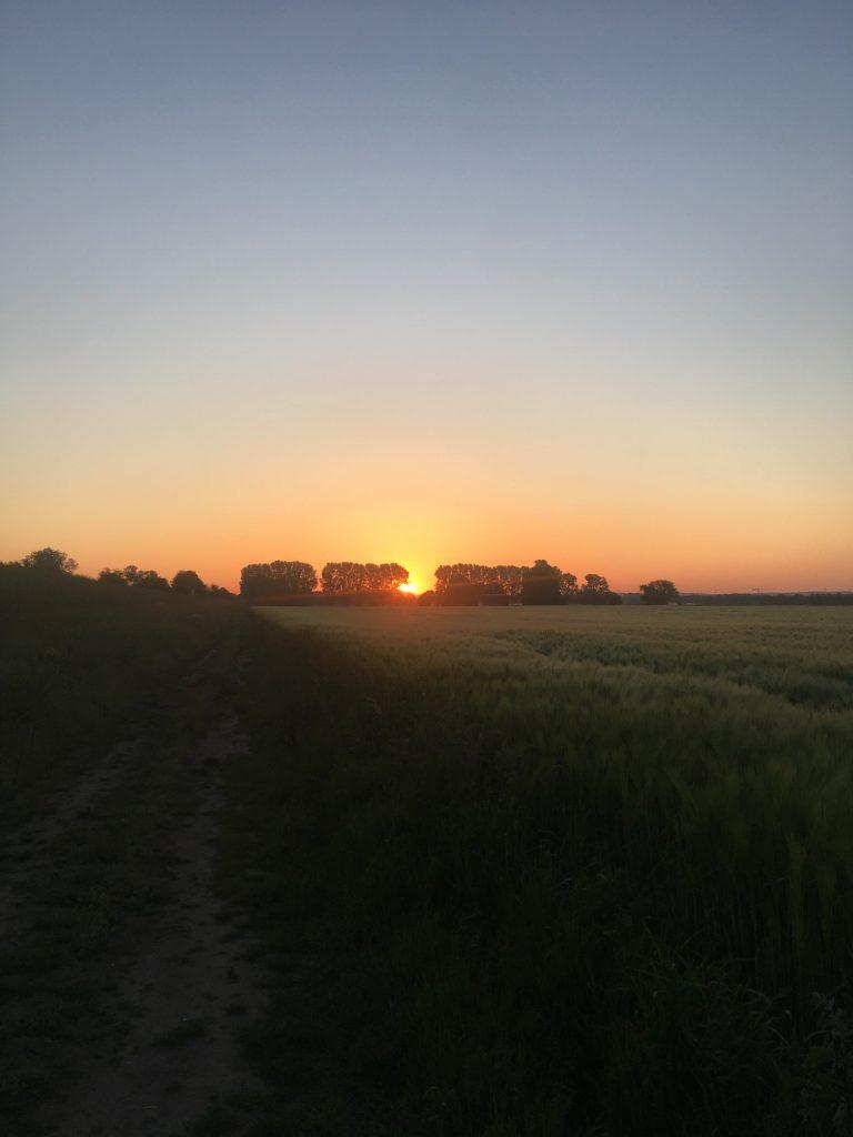 Sonnenaufgang in den Rheinwiesen